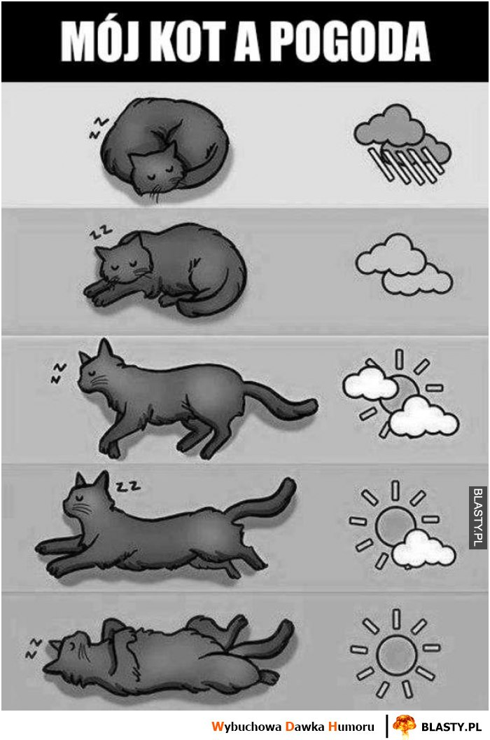 Mój kot a pogoda