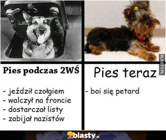 Psy kiedyś VS psy dzisiaj