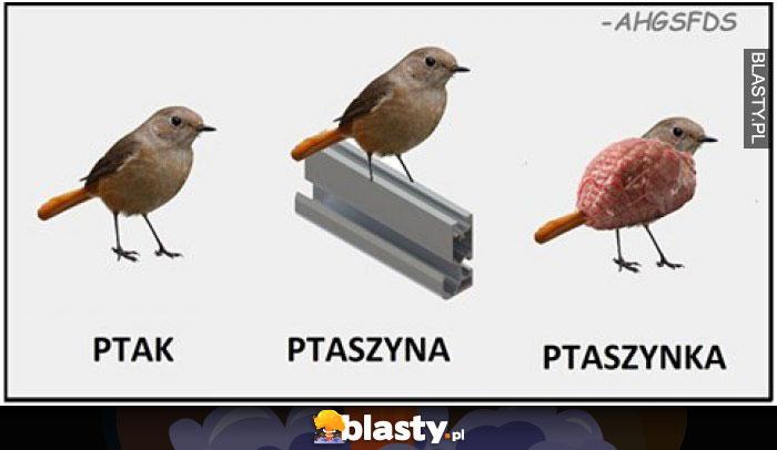 Ptak ptaszyna ptaszynka
