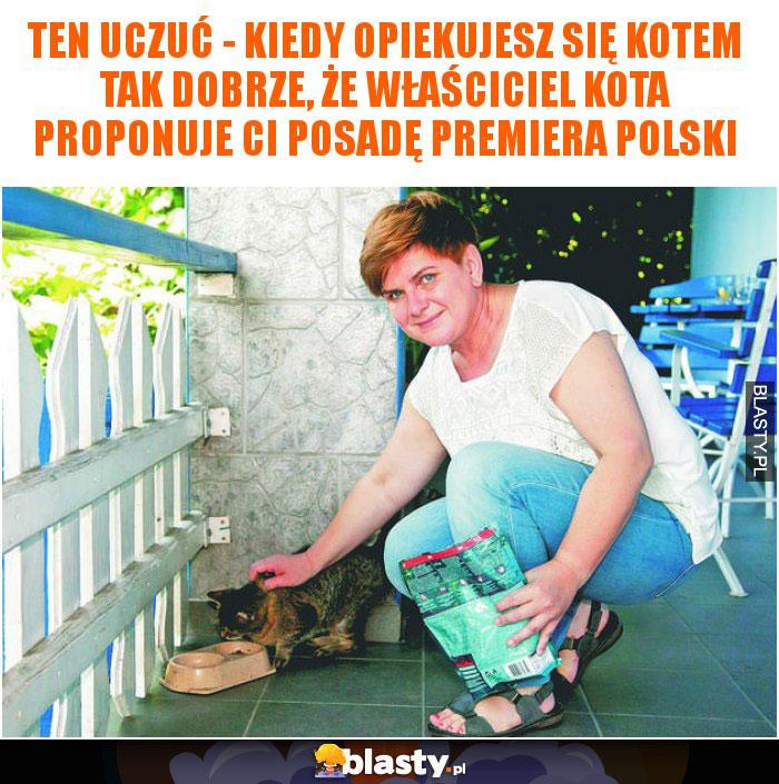 Ten uczuć - kiedy opiekujesz się kotem tak dobrze, że właściciel kota proponuje Ci posadę premiera polski