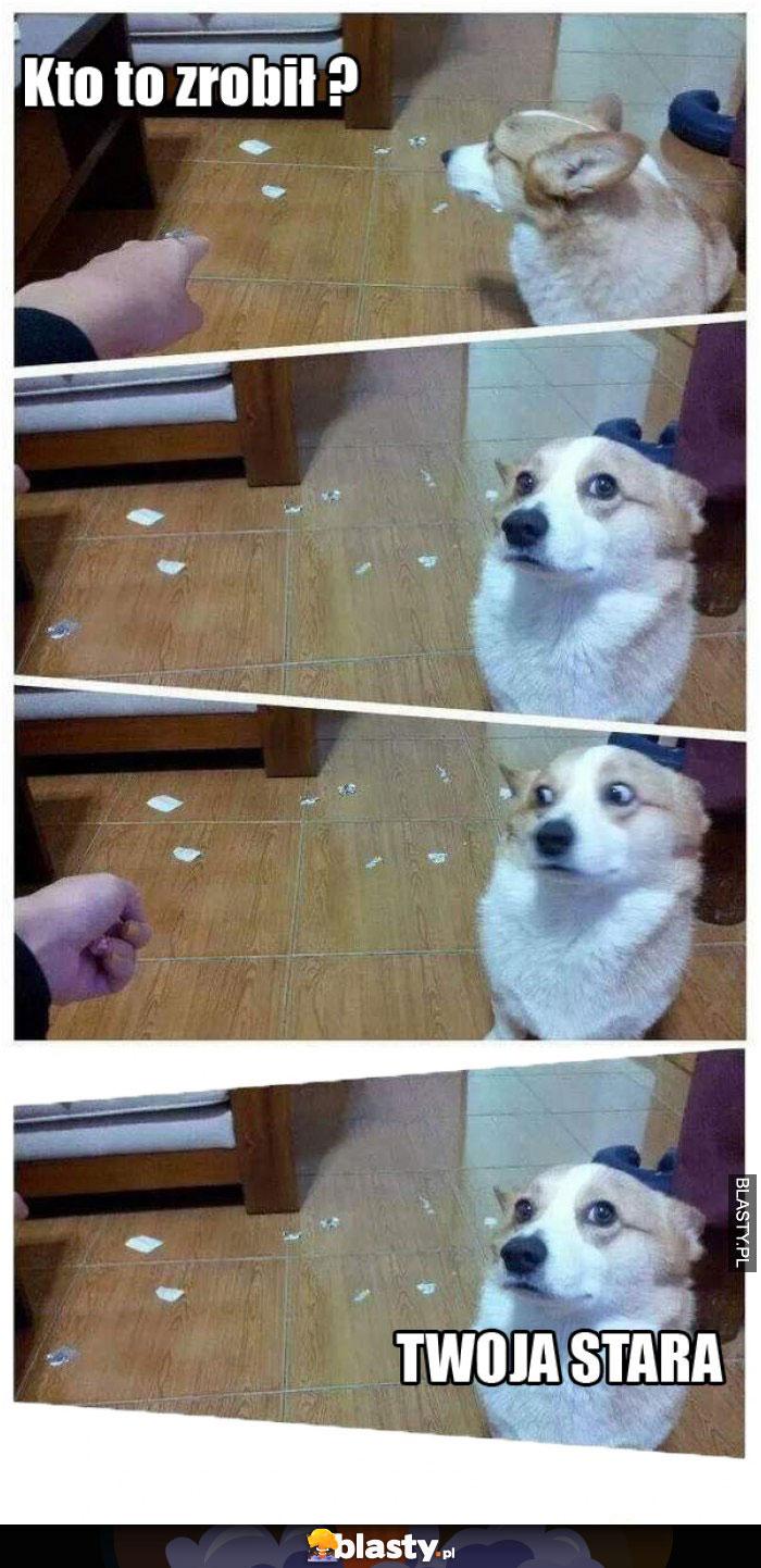 Zły pies kto to zrobił