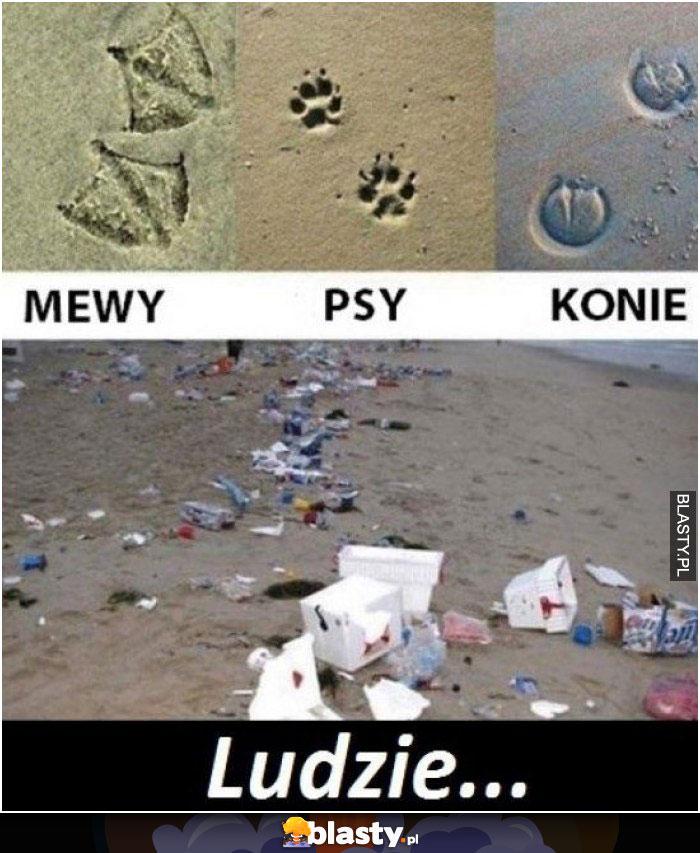 Znaki na plaży
