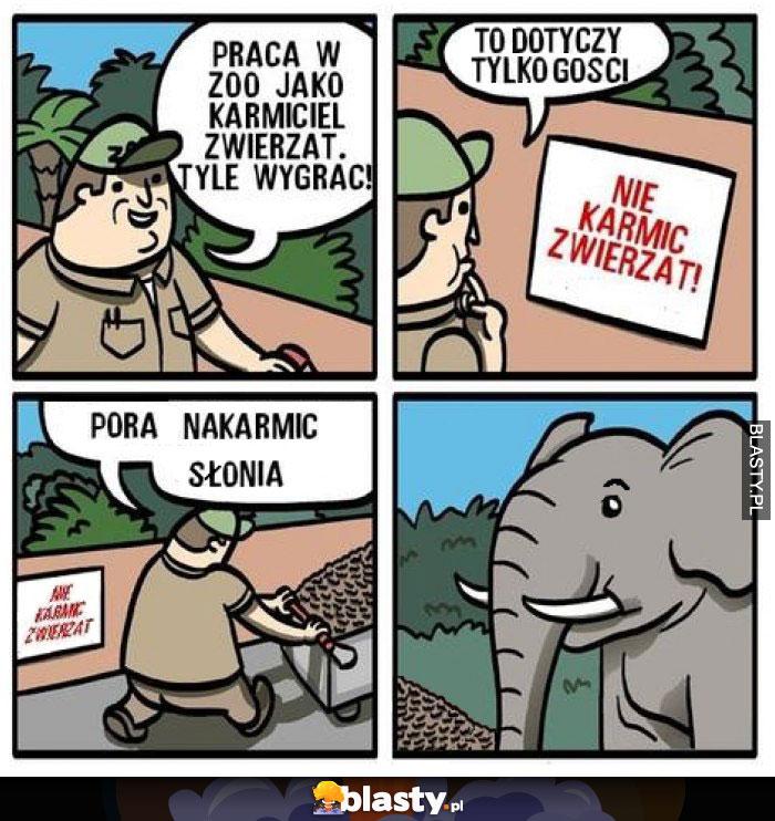 Nie karmić zwierząt postmemizm