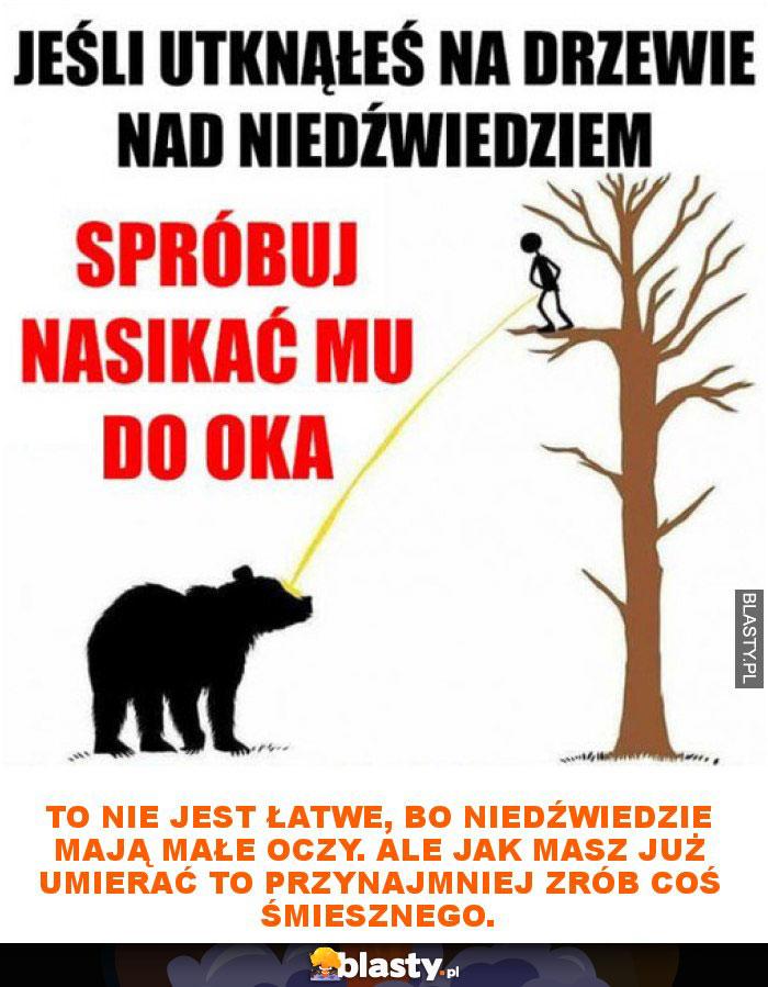 To nie jest łatwe, bo niedźwiedzie mają małe oczy. Ale jak masz już umierać to przynajmniej zrób coś śmiesznego.