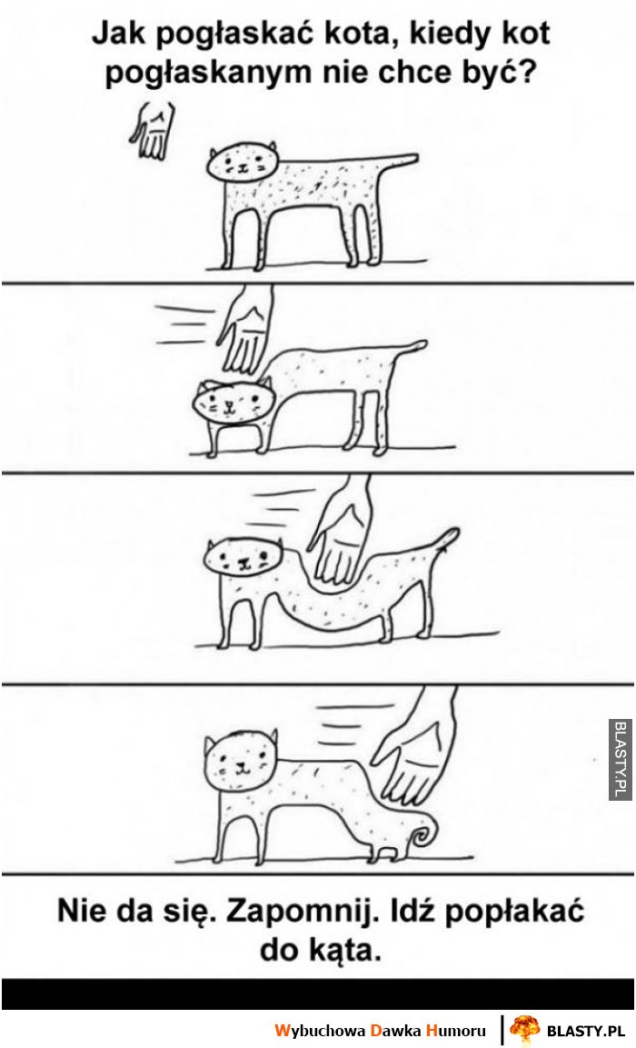 Jak pogłaskać kota