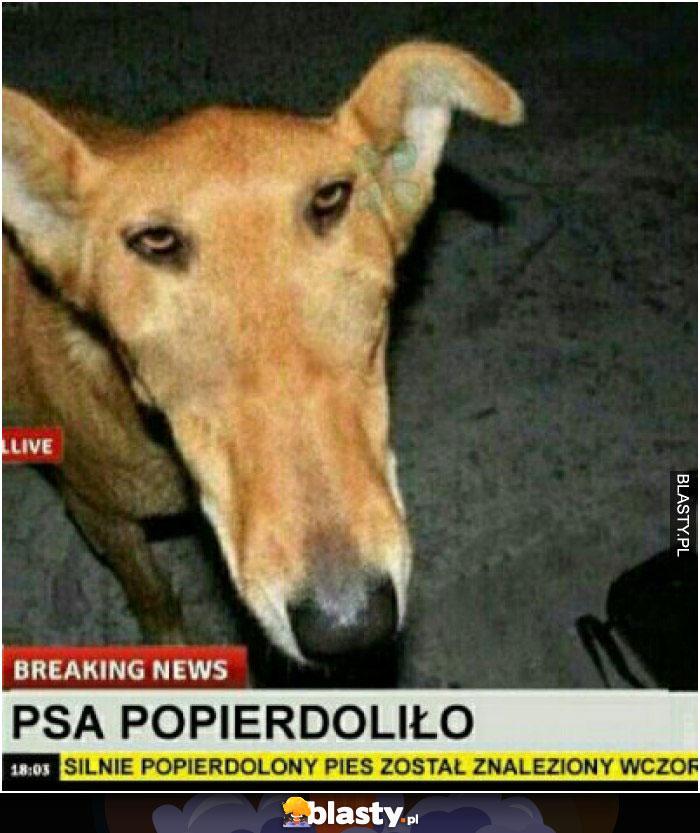 Psa popierdoliło