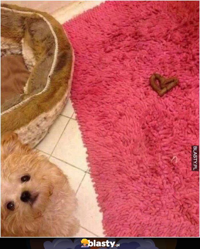 Kiedy wyrażasz miłość swojemu właścicielowi