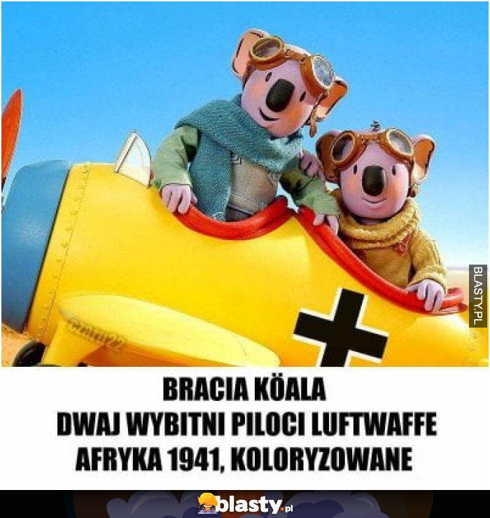 Bracia Koala