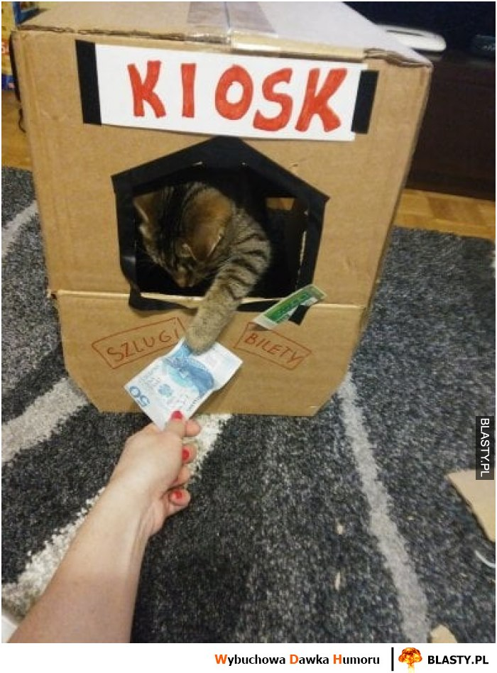 Kot sprzedawca
