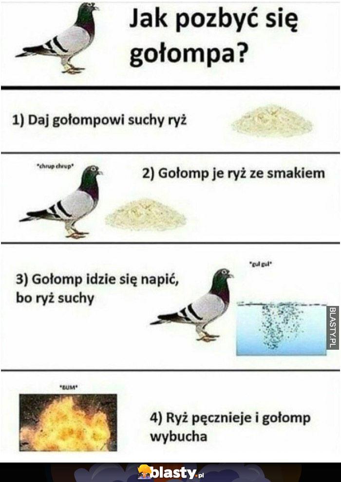 Jak pozbyć się gołębia