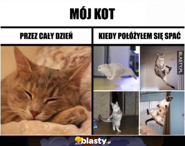 Mój Kot Przez Cały Dzień Vs Kiedy Pójdę Spać Memy Gify I śmieszne