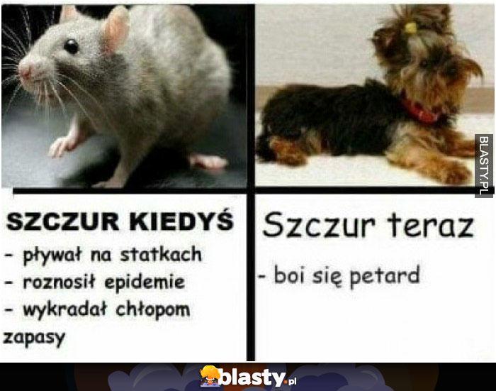 Szczur kiedyś vs szczur dzisiaj