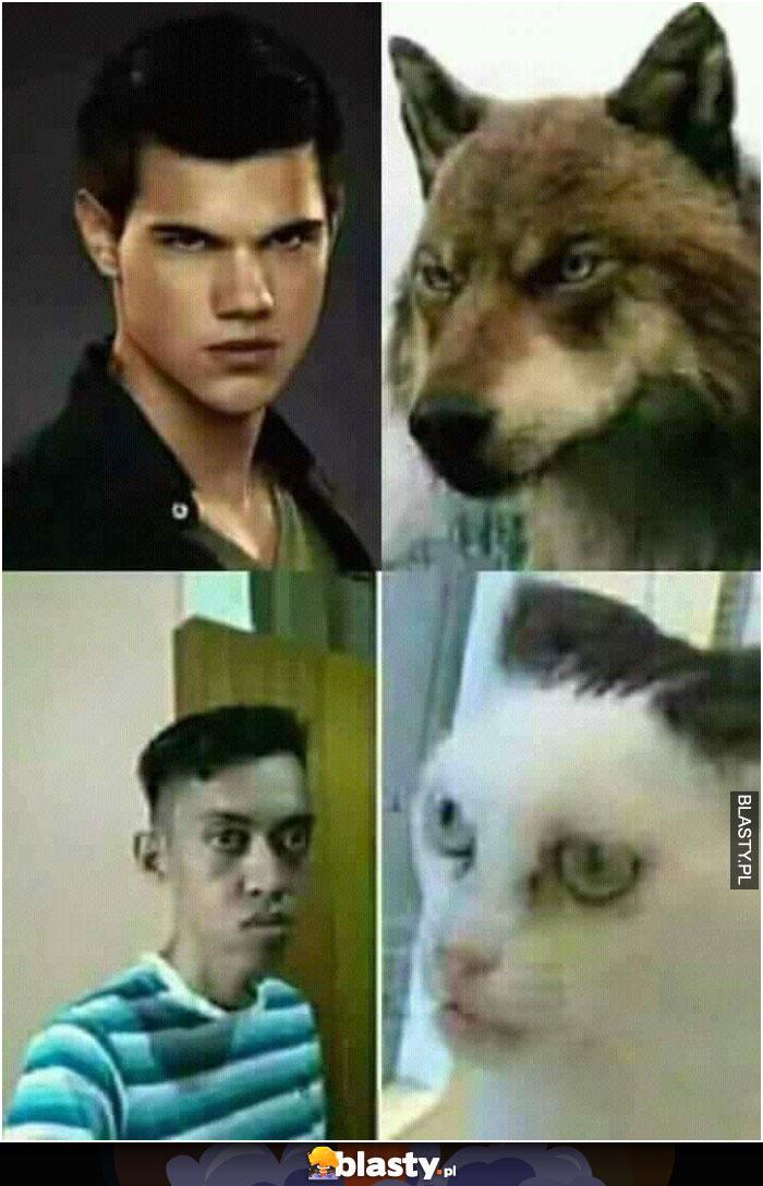 20 Memów Smieszny Kot Najlepsze śmieszne Memy I Demotywatory