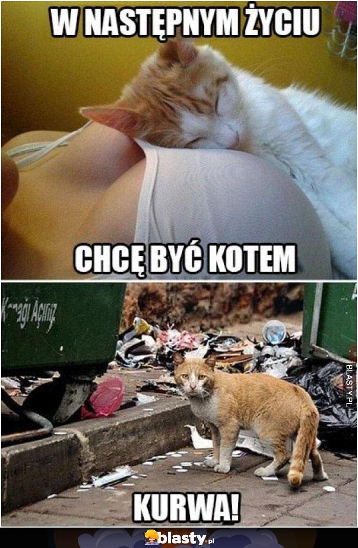 20 Memów Kot Przytulony Do Piersi Najlepsze śmieszne Memy I