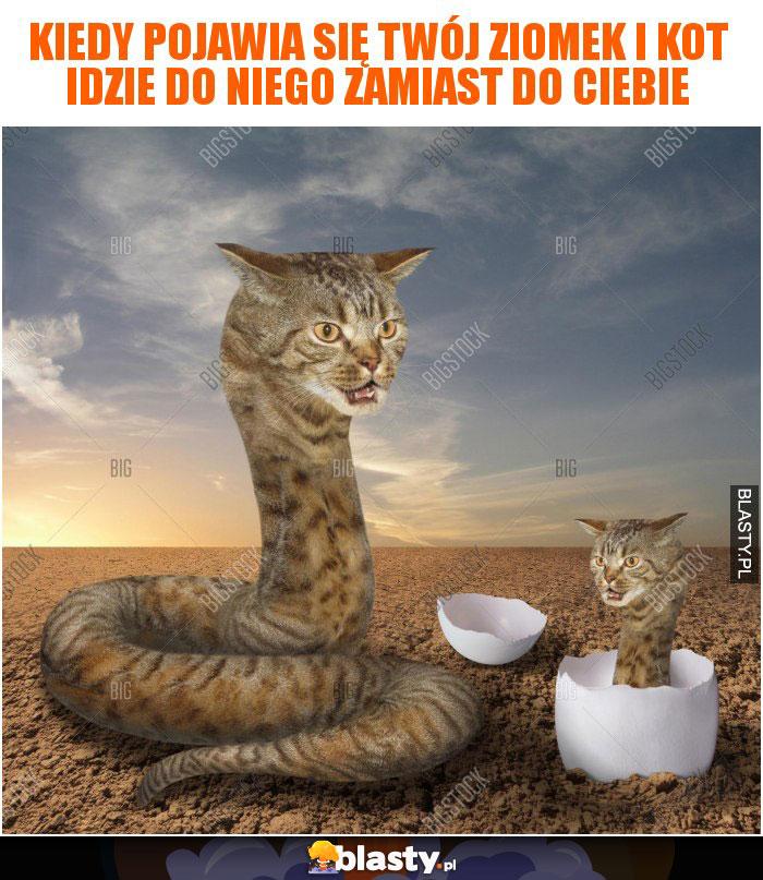 Kiedy Pojawia Się Twój Ziomek I Kot Idzie Do Niego Zamiast Do Ciebie