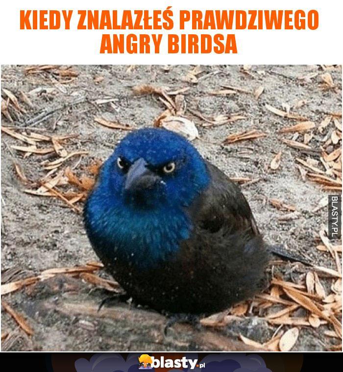 Kiedy znalazłeś prawdziwego angry birdsa