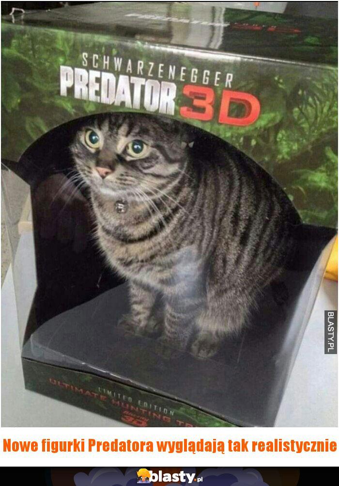 Kot Predator Memy Gify I śmieszne Obrazki Facebook Tapety
