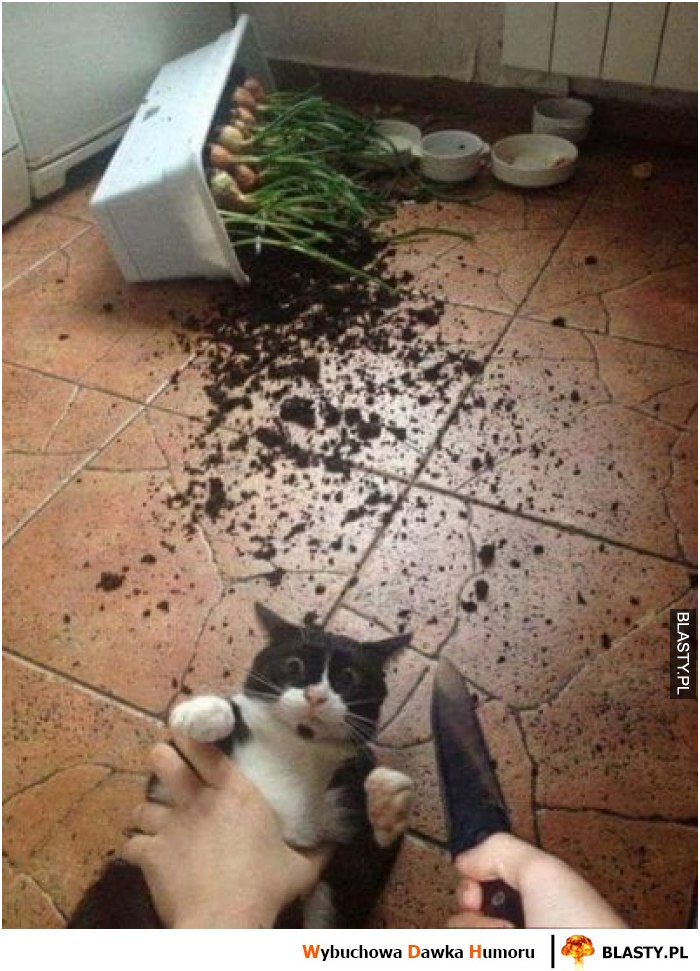 20 Memów Kot Zrzucil Doniczke Najlepsze śmieszne Memy I