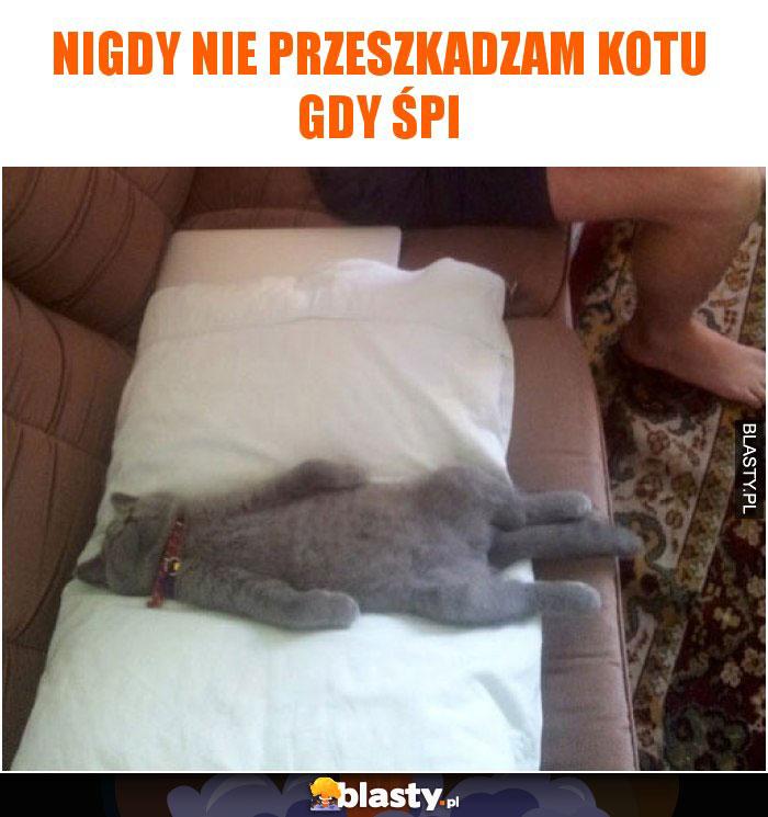 Nigdy nie przeszkadzam kotu gdy śpi