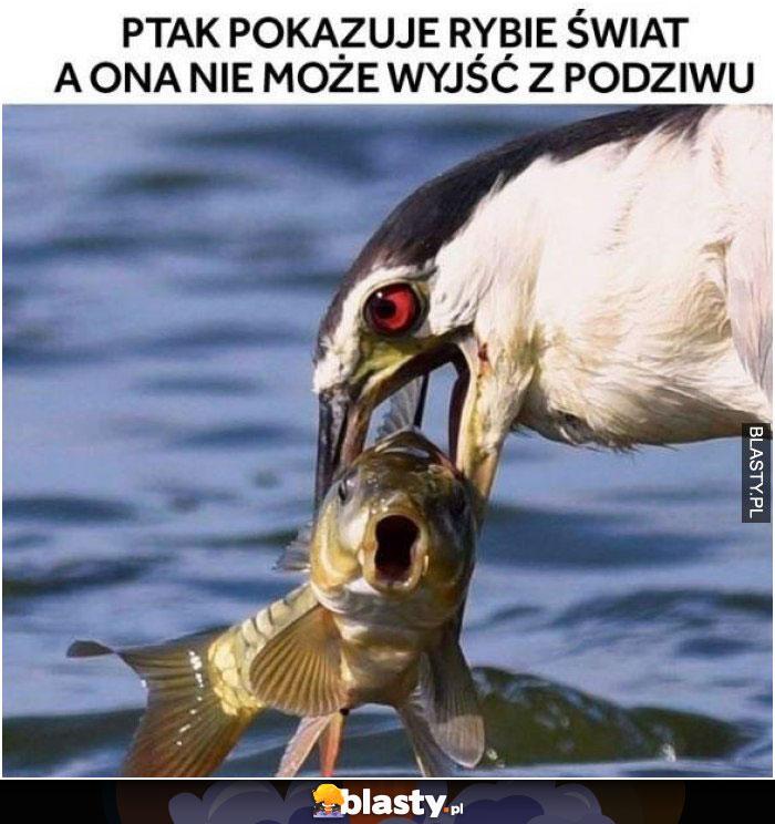 Ptak pokazuje rybie świat