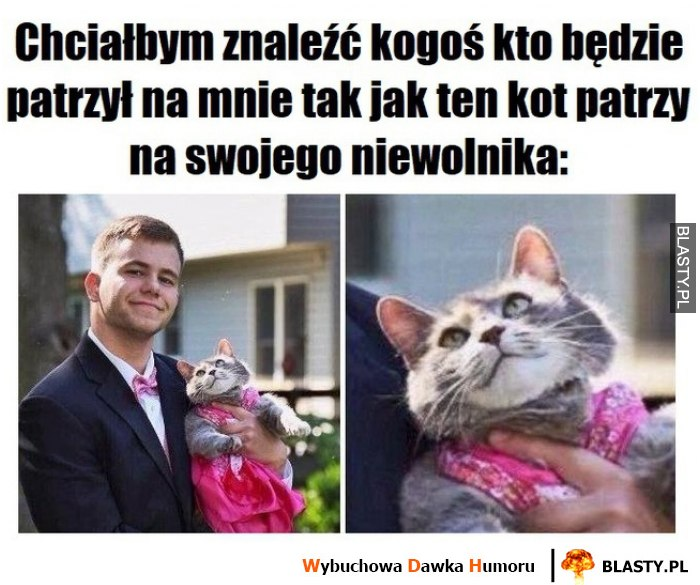 Śmieszny kotek
