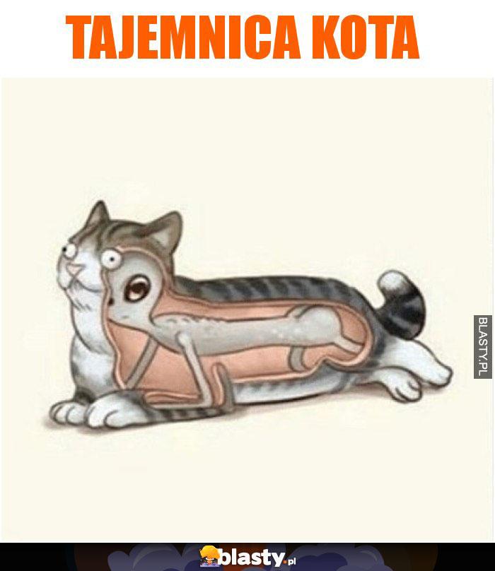 Tajemnica kota