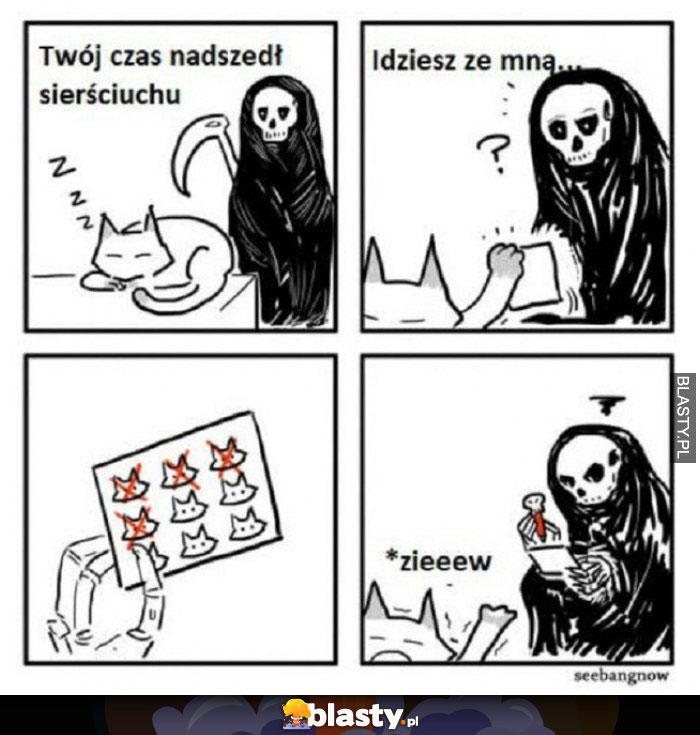 20 Memów Kot Najlepsze śmieszne Memy I Demotywatory Facebook Kot