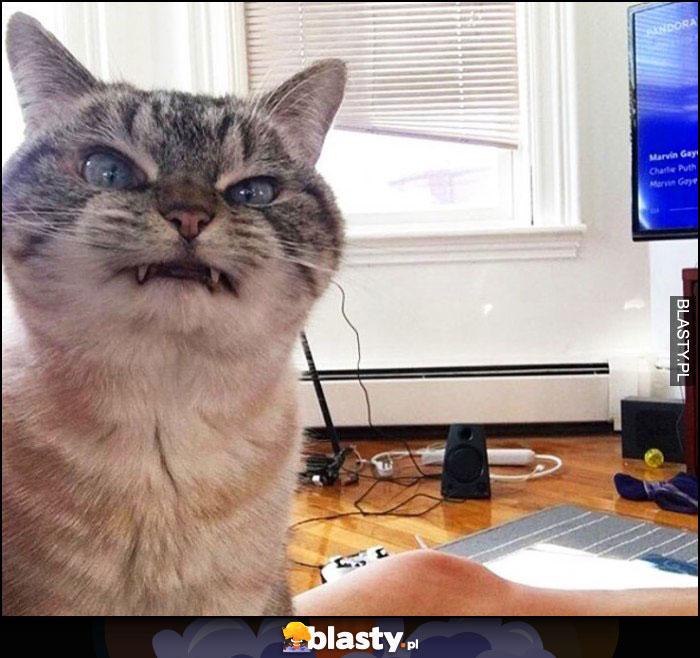 Wkurzony Kot Memy Gify I śmieszne Obrazki Facebook Tapety