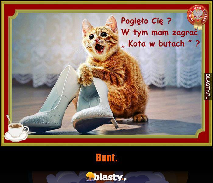 Kot W Butach Memy Gify I śmieszne Obrazki Facebook Tapety