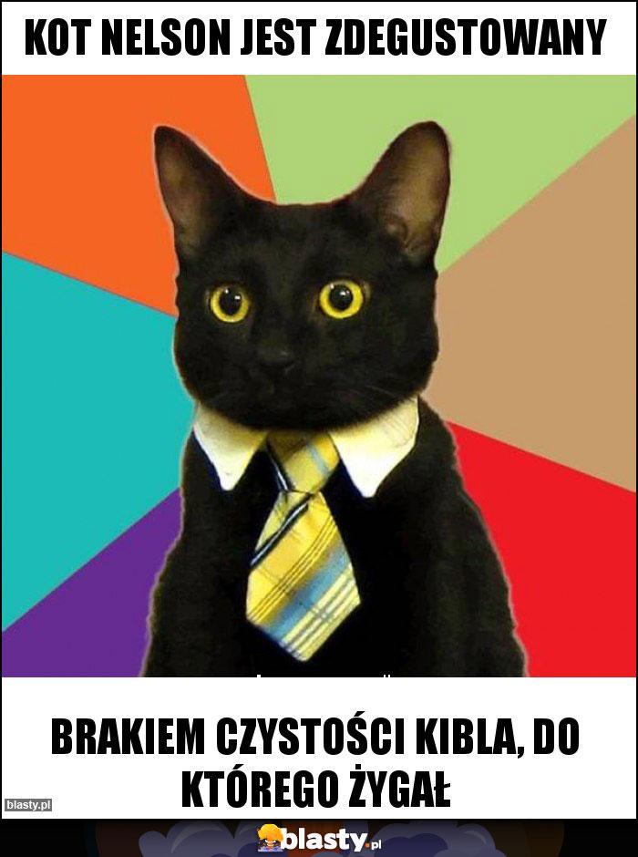 Kot Nelson Jest Zdegustowany Memy Gify I śmieszne Obrazki Facebook
