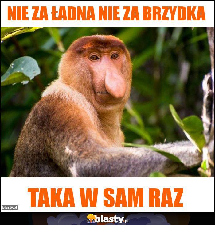 Mem Janusz Nie za ładna nie za brzydka taka w sam raz