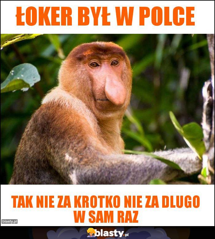 ŁOKER BYŁ W POLCE