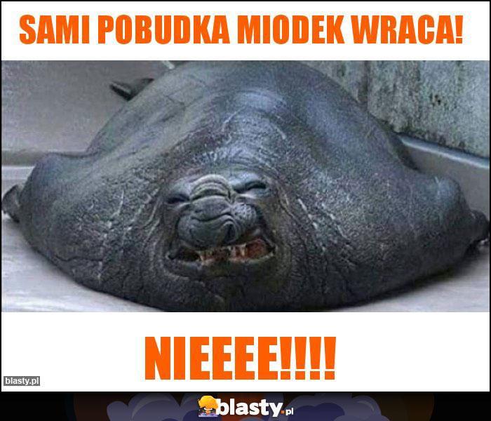 SAMI Pobudka Miodek wraca!