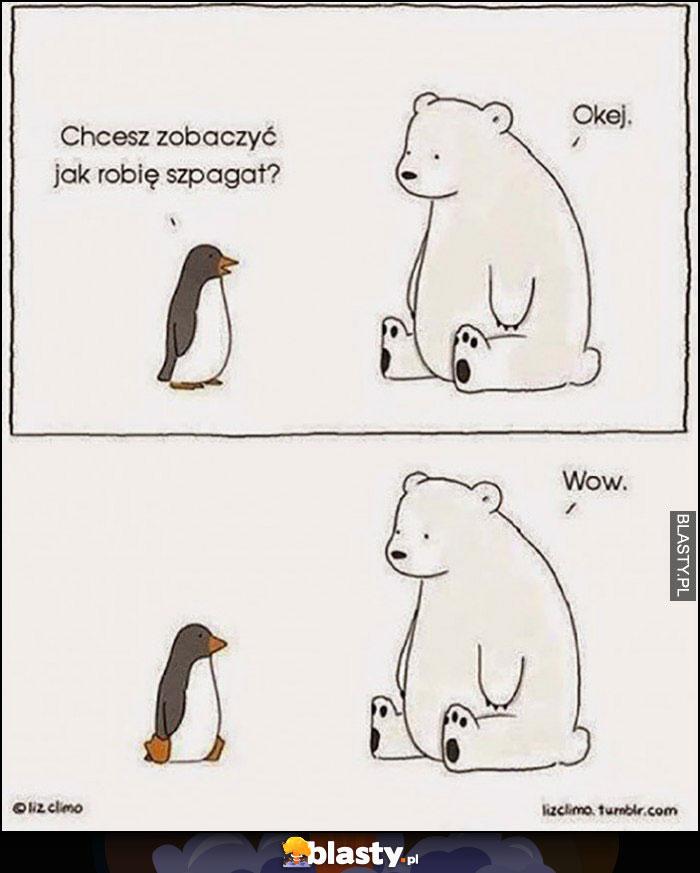 Pingwin chcesz zobaczyć jak robię szpagat niedźwiedź wow
