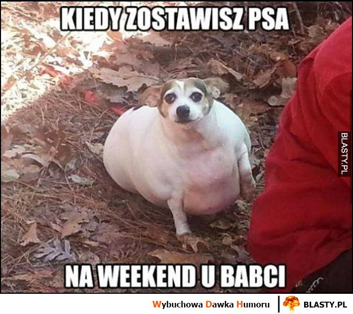 Kiedy zostawisz psa na weekend u babci gruby spasiony