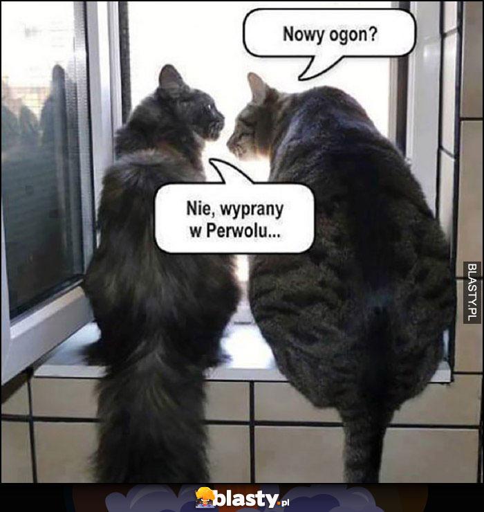 Kot nowy ogon? Nie, wyprany w perwolu