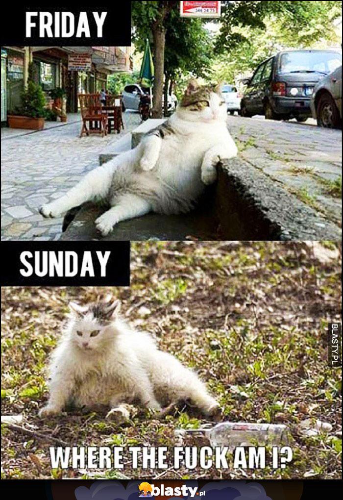 Kot po imprezie piątek niedziela porównanie, gdzie ja jestem