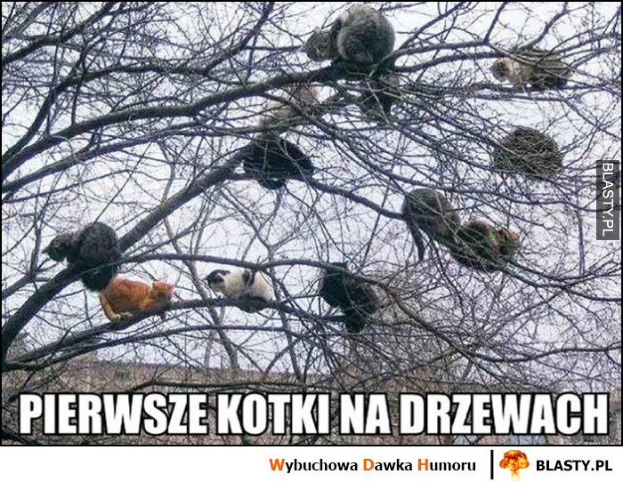 Pierwsze kotki na drzewach