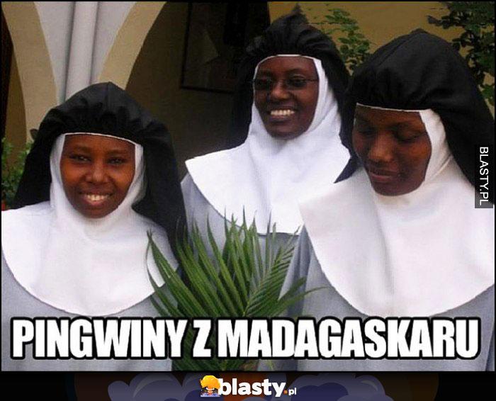 Pingwiny z madagaskaru siostry zakonne
