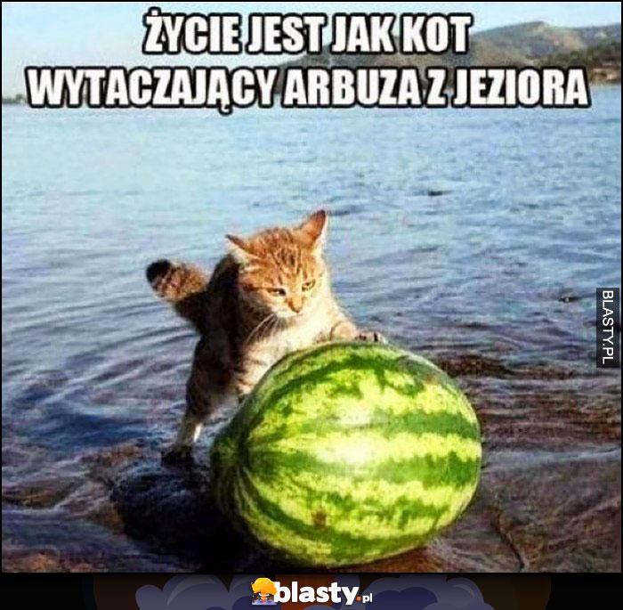 Życie jest jak kot wytaczający arbuza z jeziora