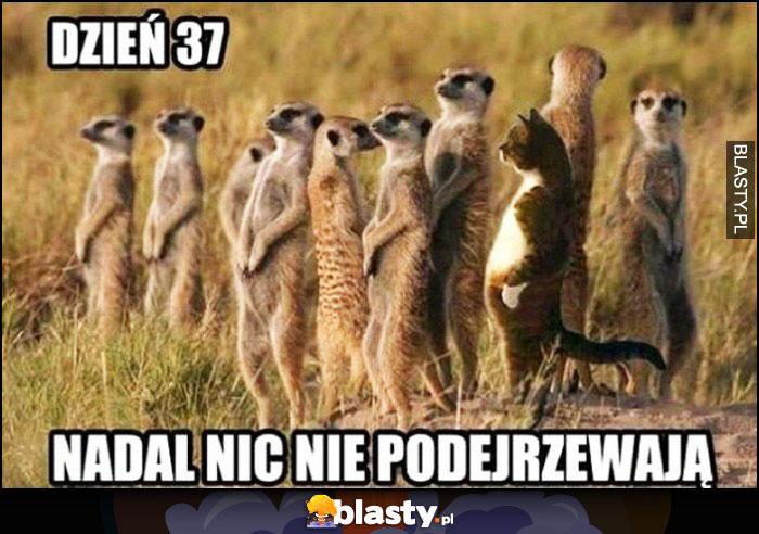 Dzień 37 nadal nic nie podejrzewają kot wśród zwierząt na pustyni