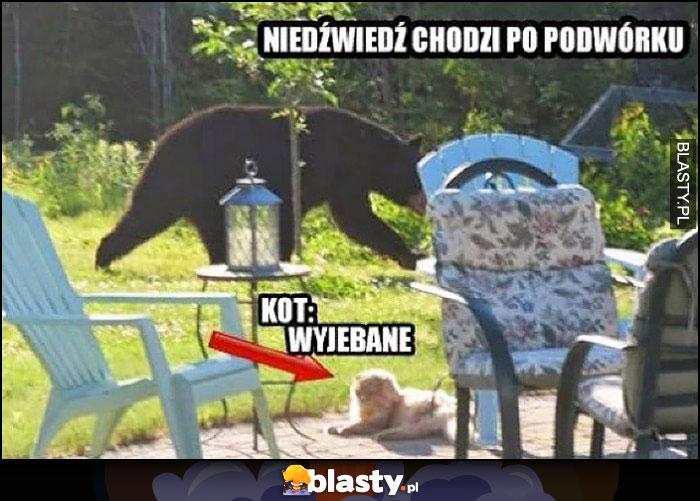Niedźwiedź chodzi po podwórku, kot: wywalone