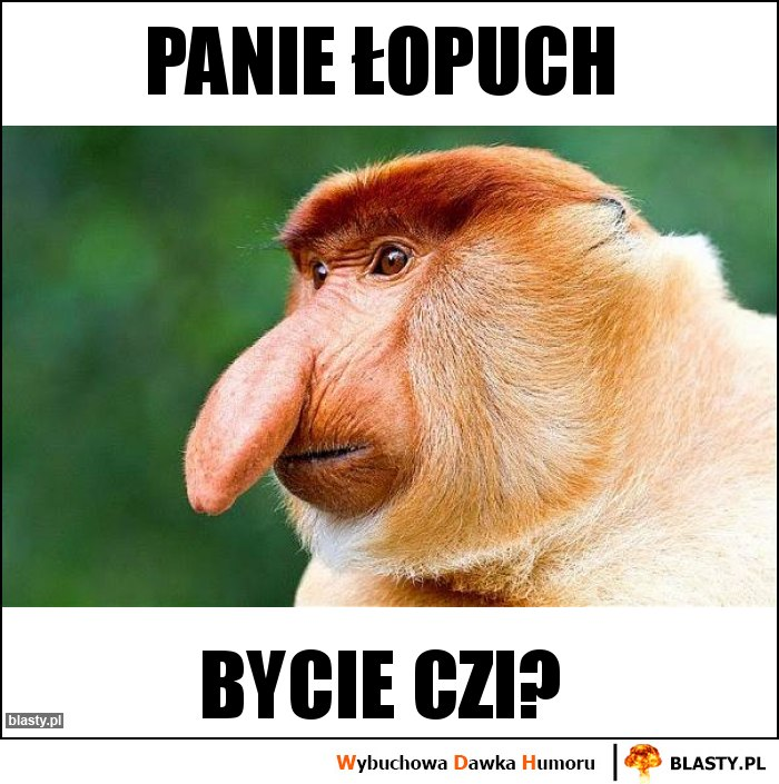 Panie Łopuch