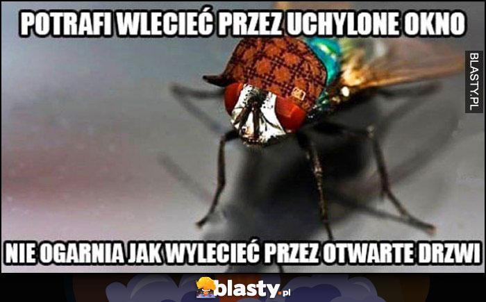 Mucha potrafi wlecieć przez uchylone okno, nie ogarnia jak wylecieć przez otwarte drzwi