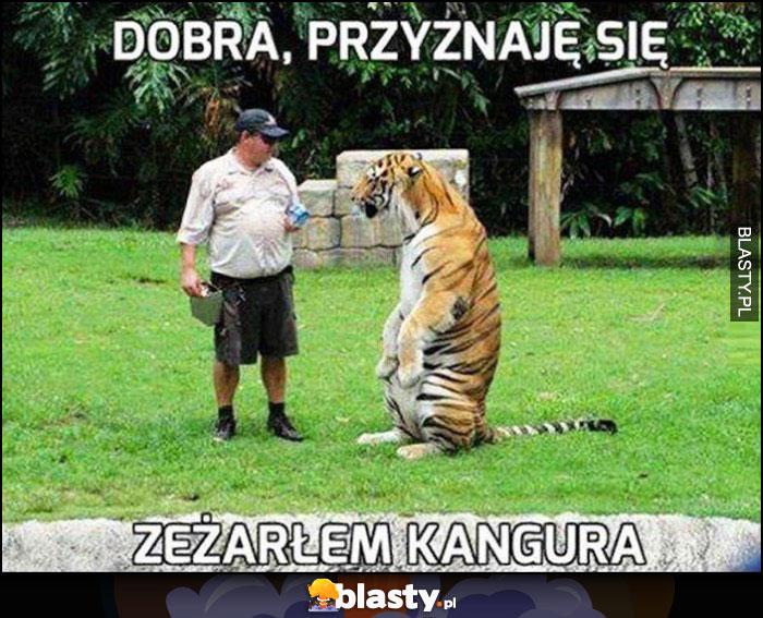 Dobra przyznaje się, zeżarłem kangura, tygrys siedzi jak kangur