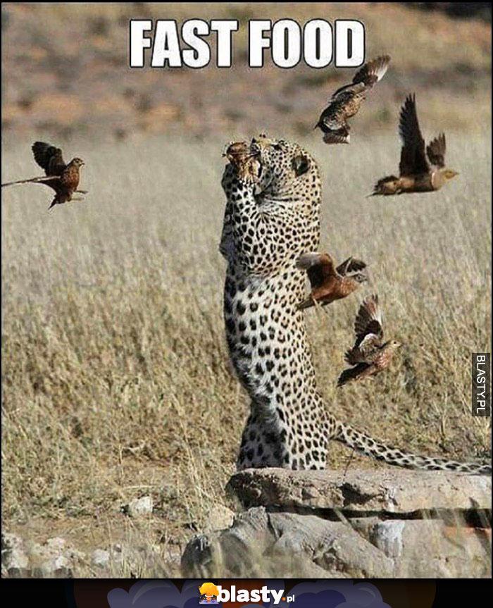 Fast food gepard łapie ptaki w locie wprost do pyska