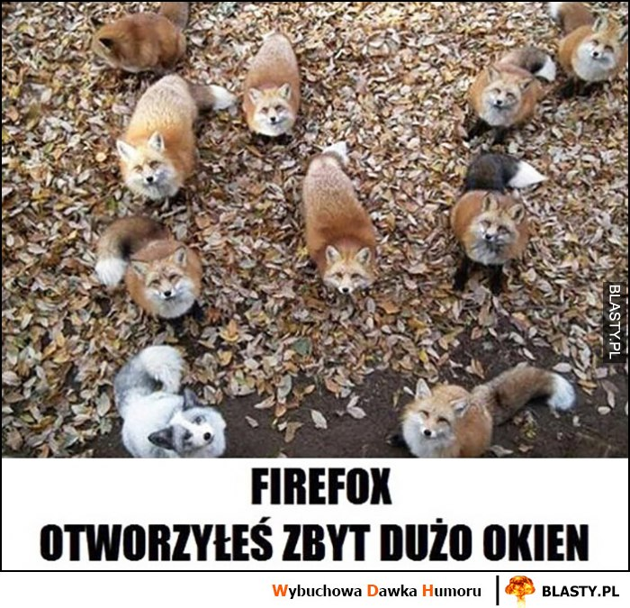 Firefox otworzyłeś zbyt dużo okien lisy