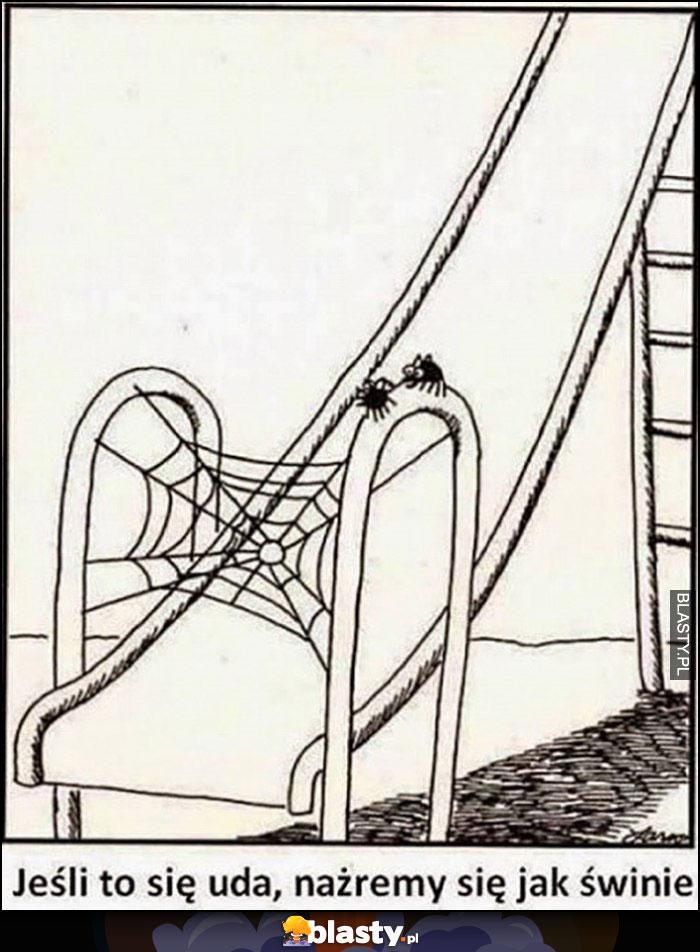 Jeśli to się uda, nażremy się jak świnie pająki zjeżdżalnia