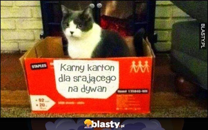 Karny karton dla srającego na dywan kot w pudełku