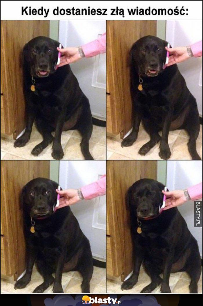 Kiedy dostaniesz złą wiadomość pies rozmawia przez telefon